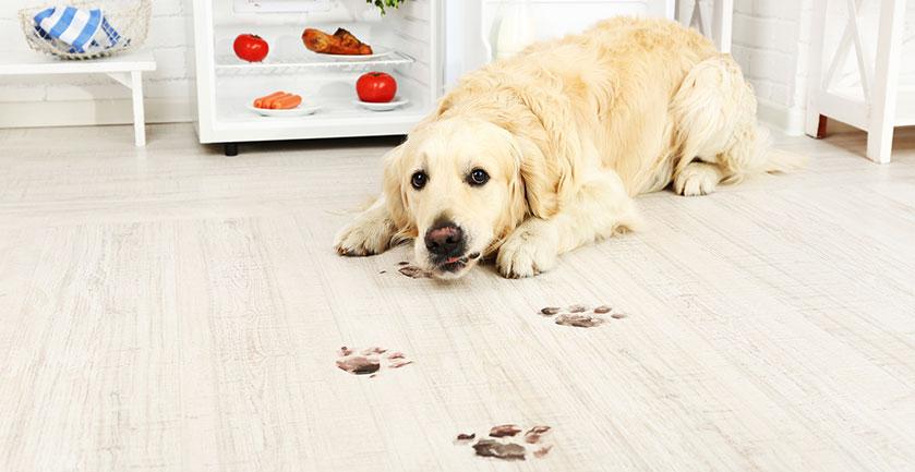 muddy-dog