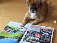 dog-reading-gg