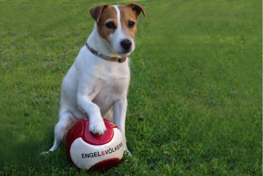 engel-puppy